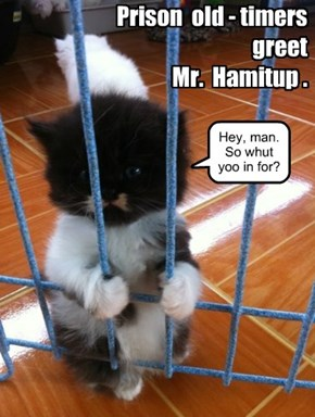 Mr. Hamitup has to learn to love the lock-up.