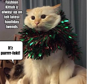 Fashion  Kitteh iz alwayz up on teh latest hauliday twends
