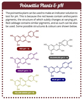 The Chemistry of Poinsettas