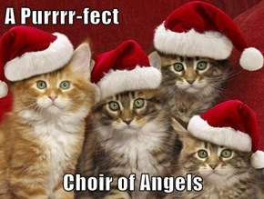 A Purrrr-fect  Choir of Angels