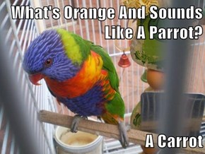 What's Orange And Sounds Like A Parrot?  A Carrot