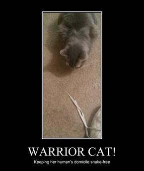 WARRIOR CAT!