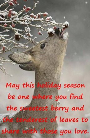 May this holiday season be one where you find the sweetest berry and the tenderest of leaves to share with those you love.