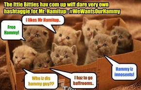 Deze Ittie Bitties hav organized in favor ob Mr. Hamitup.. an' now dat teh Ittie Bitties hav entered into teh fray, public opinion iz moving in favor of Hammy!!