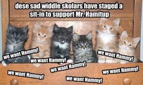 we want Hammy!