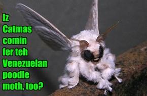 Iz  Catmas comin  fer teh Venezuelan poodle moth, too?