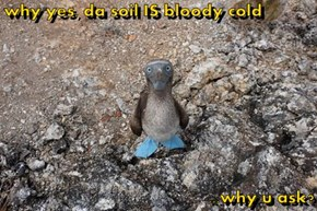 why yes, da soil IS bloody cold  ...why u ask?
