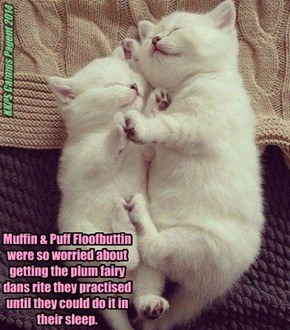 Muffin & Puff Floofbuttin were so worried about getting the plum fairy dans rite they practised until they could do it in their sleep.