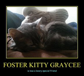 FOSTER KITTY GRAYCEE
