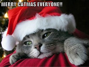 MERRY CATMAS EVERYONE!!