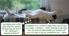 After a big an' tasty meal ob Chef Punkin's Speshul Cranberry an' Mint Glazed Chicken Delite dat filled up hims tummy, Snookers relaxes in teh Skool Lounge an' haz bery deep an' profound thawts for a kitty!