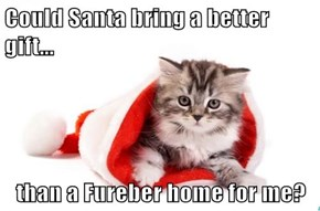 Could Santa bring a better gift...  than a Fureber home for me?