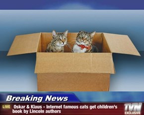Breaking News -  Oskar & Klaus - Internet famous cats get children's book by Lincoln authors
