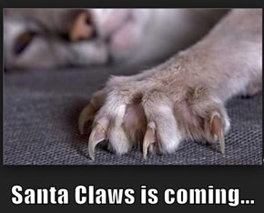 Santa Claws is coming...