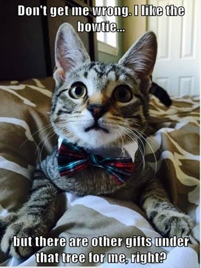 Don't get me wrong. I like the bowtie...  but there are other gifts under that tree for me, right?