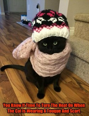 You Know It Time To Turn The Heat On When The Cat Is Wearing A Touque And Scarf.