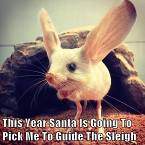 This Year Santa Is Going To Pick Me To Guide The Sleigh