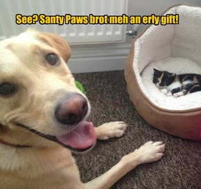 See? Santy Paws brot meh an erly gift!