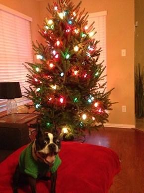 Happy Howloday Contest: Caption This Dog!