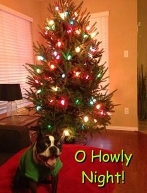 O Howly Night!