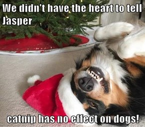 We didn't have the heart to tell Jasper  catnip has no effect on dogs!