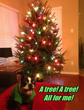 A tree! A tree!  All for me!