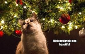Merry Catmaus
