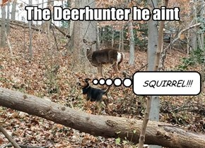 To Be Fair, Squirrels are More Difficult to Spot