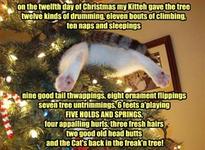 Cat Hoomin's 12 Days of Christmas