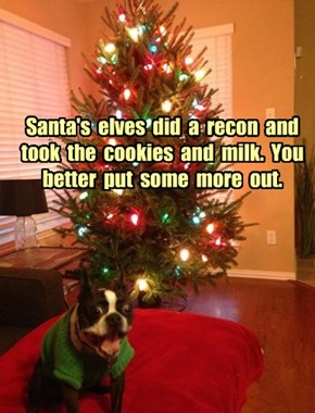 Santa's  elves  did  a  recon  and  took  the  cookies  and  milk.  You  better  put  some  more  out.