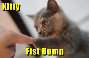 Kitty  Fist Bump