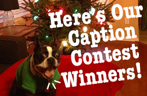 Winners of our Happy Howlodays Caption Contest!