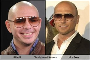 Pitbull Totally Looks Like Luke Goss