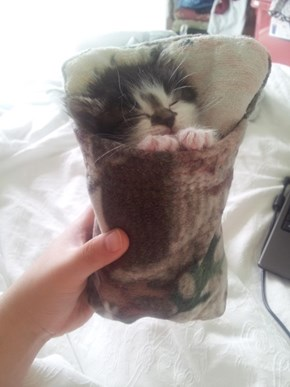 Every Kitten Should Have a Sleeping Bag