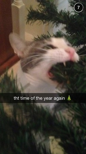 'Tis the Season for Your Cat to be an Idiot!