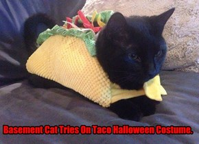 Basement Cat Tries On Taco Halloween Costume.