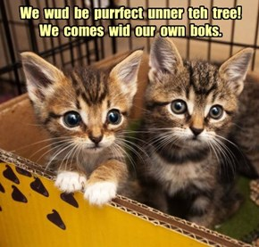 We  wud  be  purrfect  unner  teh  tree!   We  comes  wid  our  own  boks.