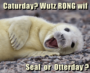 Caturday? Wutz RONG wif   Seal  or  Otterday ?