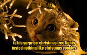 to his surprise, christmas tree lights tasted nothing like christmas cookies