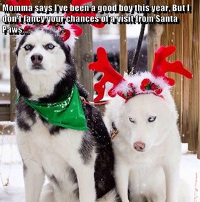 Momma says I've been a good boy this year, But I don't fancy your chances of a visit from Santa Paws...