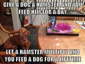 GIVE A DOG A HAMSTER AND YOU FEED HIM FOR A DAY  LET A HAMSTER MULTIPLY AND YOU FEED A DOG FOR A LIFETIME