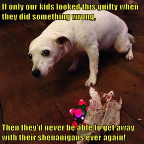 If only our kids looked this guilty when they did something wrong,  Then they'd never be able to get away with their shenanigans ever again!