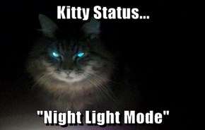 "Kitty Status...  ""Night Light Mode"""