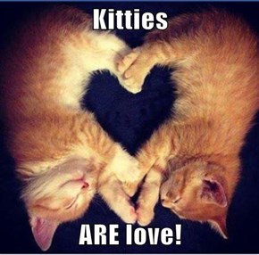 Kitties  ARE love!