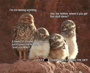 Owls Can't Handle Their Hallucinogens