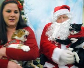 See? Cats LOVE Santa!