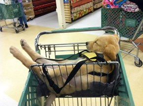 Some Pups Are Over All the Shopping