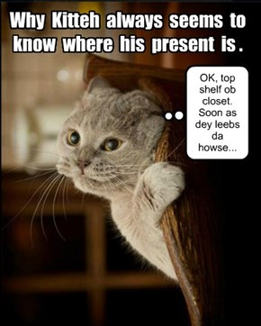 Keeping Christmas secrets from kittehs is not easy...