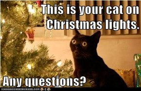 This is your cat on Christmas lights.  Any questions?
