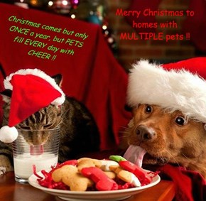 Merry Christmas to homes with MULTIPLE pets !!